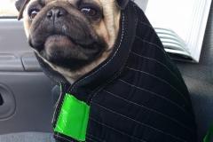 Charlies-dog-Earnie